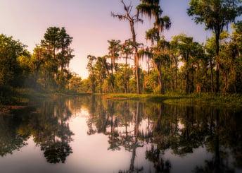 swamp-4544970_1920